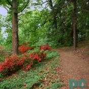 A network of rustic woodland trails follows the contours of Mount Hamilton and allows you to view the azalea blossoms at close range.