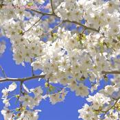Bloom-03-30-10.jpg
