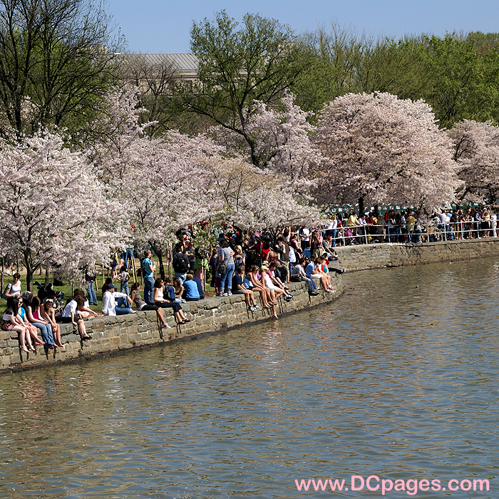 2010 Cherry Blossom Photos