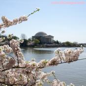 Jefferson-Memorial-4-2-10-A.jpg