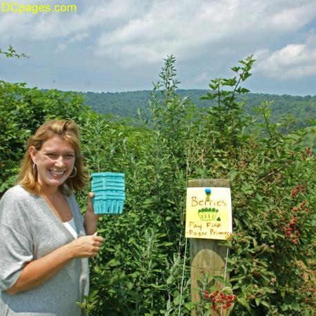 Pick Your Own Farms in Northern Virginia