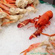 Fresh Maine Lobster on a bed of ice.