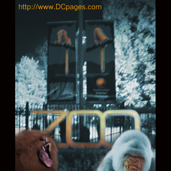 dcpages would like to thank the friends of the national zoo and the animals for a