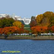 Autumn view of White House from tidal basin.