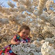Baby Girl Surrounded by Japanese Cherry Blossoms.