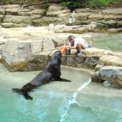 National Zoo has one male California sea lion, Norman, and one female, Maureen.